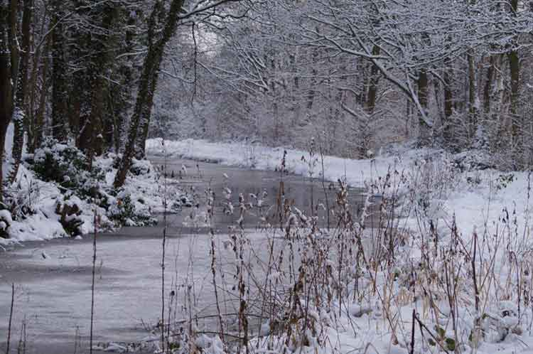 Cromford Canal in winter
