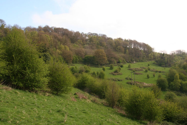 Crich Chase Meadows